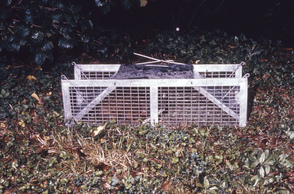 This photograph depicts a Havahart� animal trap used during an arboviral study.