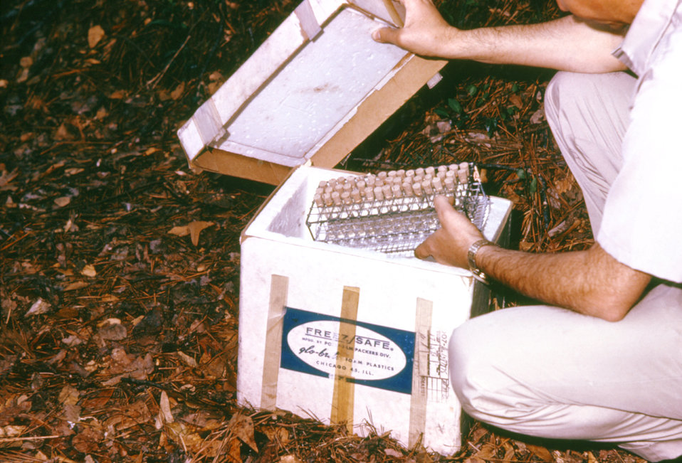 These blood specimens collected from vertebrates during an arbovirus field study are being stored on ice.