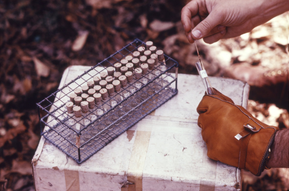 This CDC field clinician is collection and processing vertebrate blood specimens for subsequent arbovirus studies.