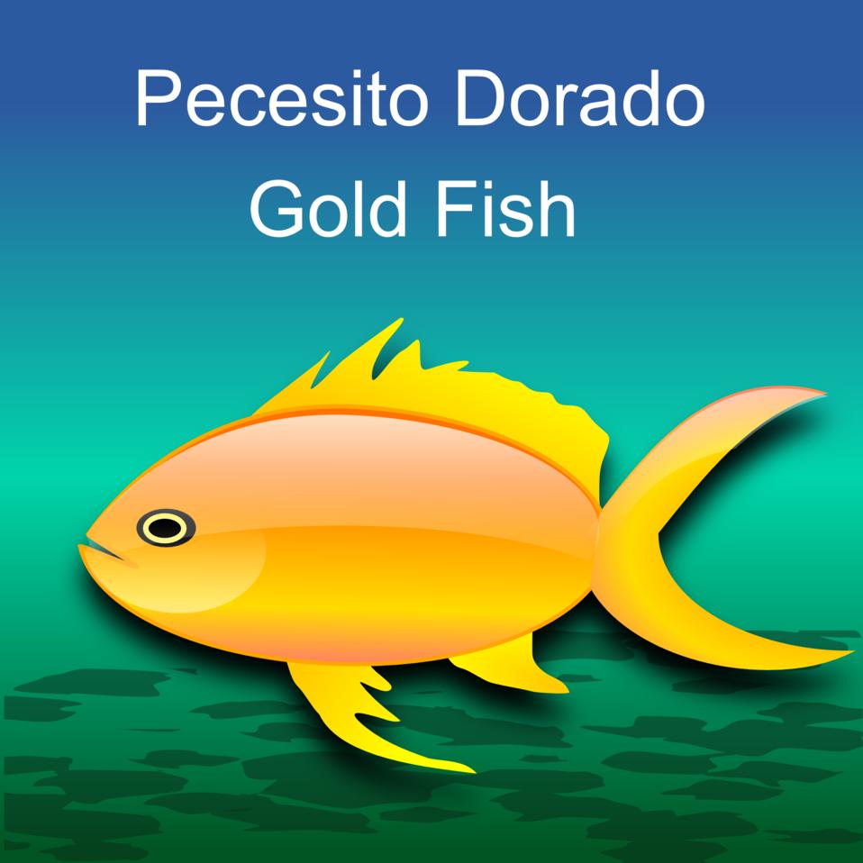 Pez dorado (gold fish)