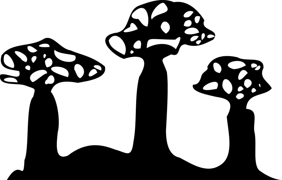 Boab silhouette