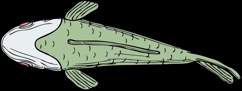 fish top view