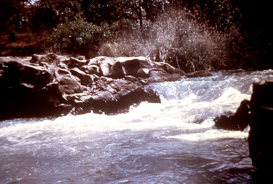 """This 1978 photograph depicts a riverine breeding place for blackflies, the vector of onchocerciasis or """"river blindness""""."""