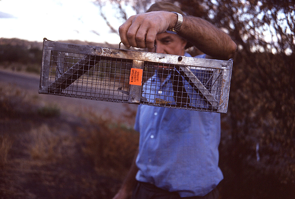 This photograph shows a trapped field mouse that was tested as part of a 1975 CDC Zimbabwe Marburg virus outbreak investigation.