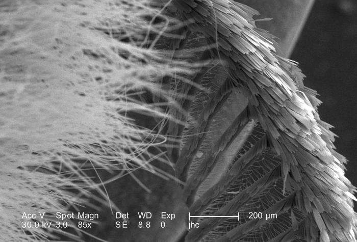 Under a relatively low magnification of 85X, this scanning electron micrograph (SEM) revealed some of the ultrastructural morphology located