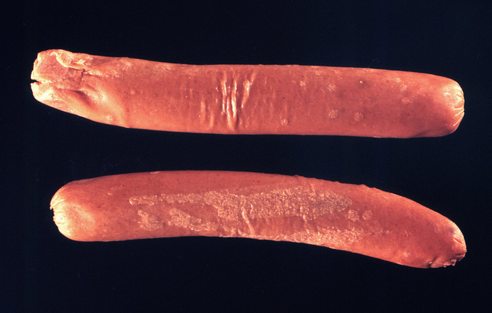 Note the fungal colonies on these two frankfurters. The organism responsible for these colonies is unknown.
