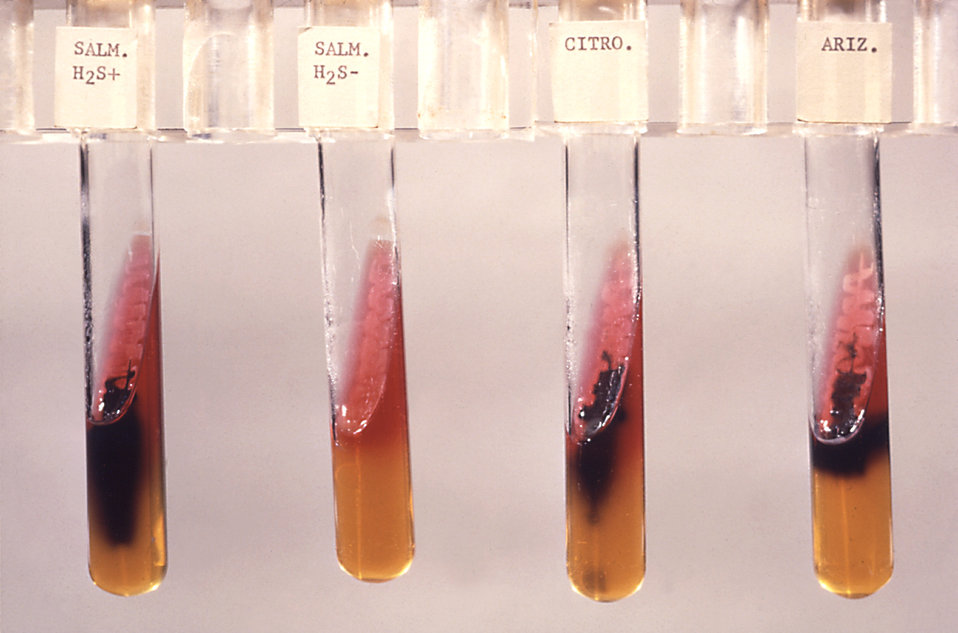 This triple sugar iron agar (TSI) tested for Salmonella (H2S ) and (H2S-); Citrobacter sp. and S. arizonae.