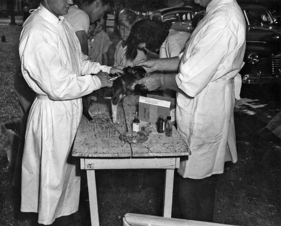 This image shows two veterinarians who had made a 'house-call', and were in the process of administering an on-site rabies vaccination to a
