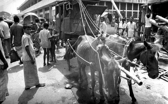 This photograph depicted a typical Bangladesh street scene in the port of Sadarghat, in the capital city of Dhaka that included a mule-drawn
