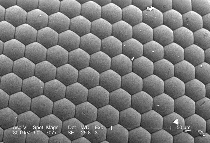 Under this moderate magnification of 707x, this scanning electron micrograph (SEM) depicted the surface of an unidentified insect's compound