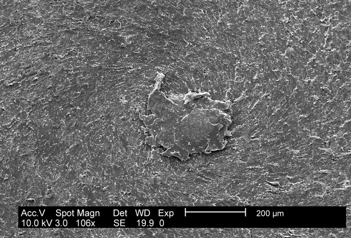 This low-mag SEM depicts an E. coli (ATCC 11775) biofilm on PC (polycarbonate) coupons using a CDC biofilm reactor.