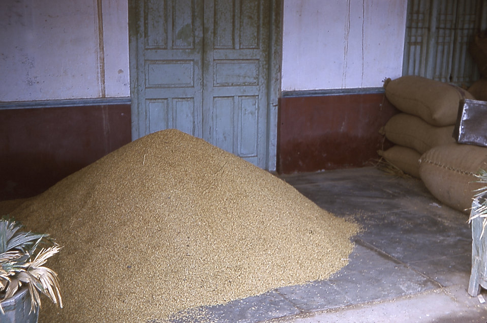 The photo depicts a common method of rice storage in Gujarat, India villages.