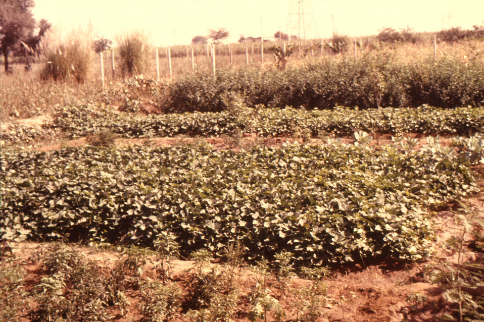 This image of an irrigated farm was taken during trip by CDC personnel to Northern India to study rhesus monkeys.