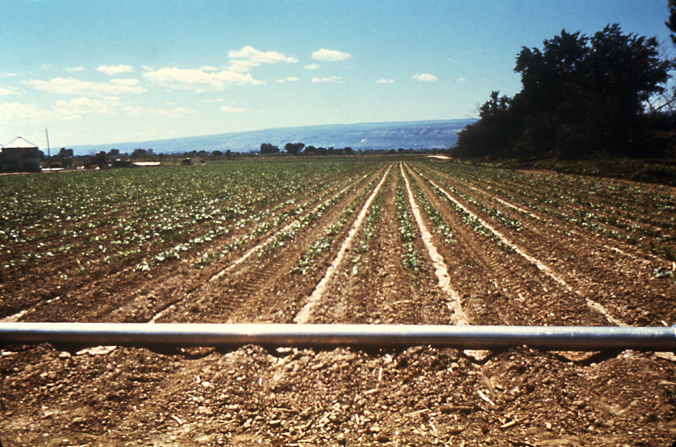 This irrigation pipeline running across a furrowed Colorado field minimizes the chance for the accumulation of standing water.