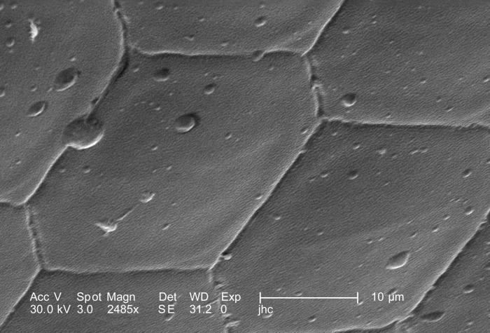 Under a high magnification of 2485X, which is 32X greater than PHIL 10118, this scanning electron micrograph (SEM) depicted the surface of t
