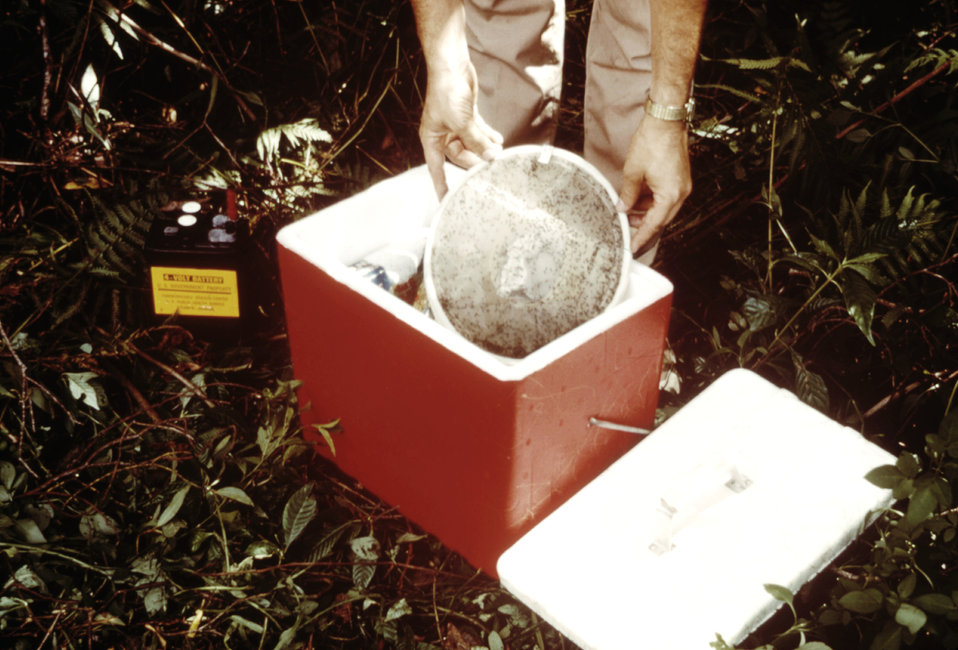 This CDC field researcher is shown setting a mosquito collection bag in a cooler for to be transported to a laboratory setting.