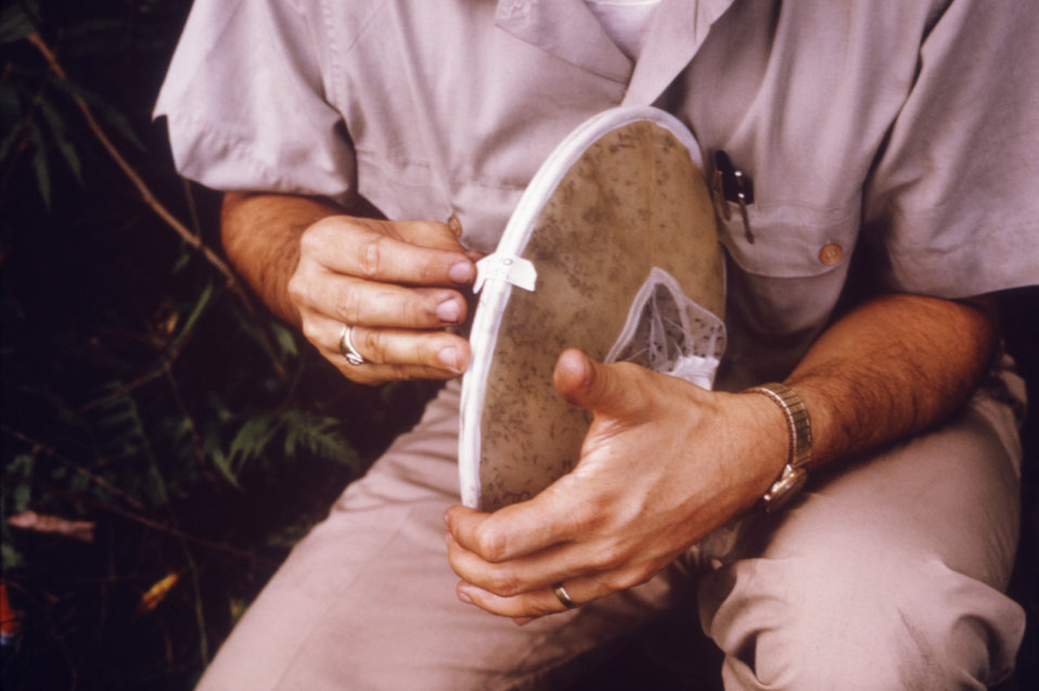 A CDC field researcher is shown here sealing the mosquito collection bag for storage during an arborvirus isolation study.