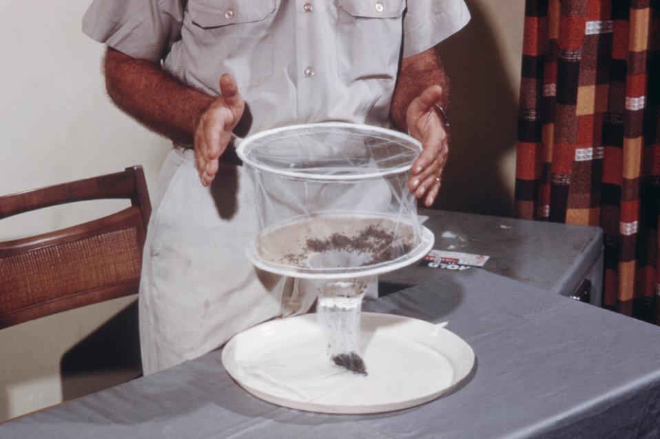 Once the collected mosquitoes have been thawed after being kept on dry ice, they are emptied from the mosquito collection bag.