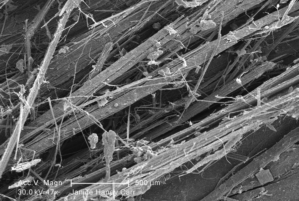 Under a low magnification of 47X, this scanning electron micrograph (SEM) revealed some of the microcrystalline ultrastructure exhibited by