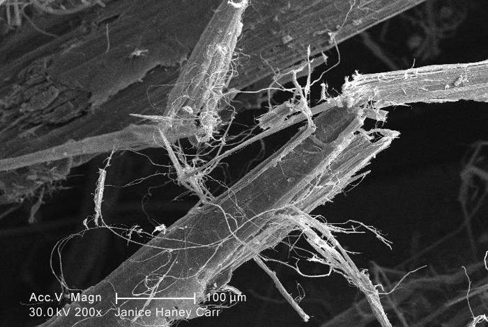 Under a moderate magnification of 200X, this scanning electron micrograph (SEM) revealed some of the microcrystalline ultrastructure exhibit