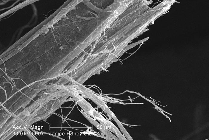 Under a moderate magnification of 500X, this scanning electron micrograph (SEM) revealed some of the microcrystalline ultrastructure exhibit