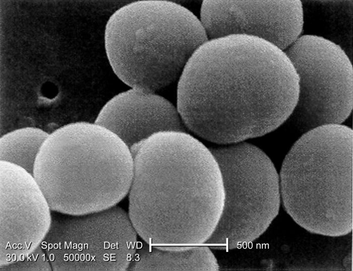 Under a very high magnification of 50,000x, this scanning electron micrograph (SEM) shows a strain of Staphylococcus aureus bacteria taken f
