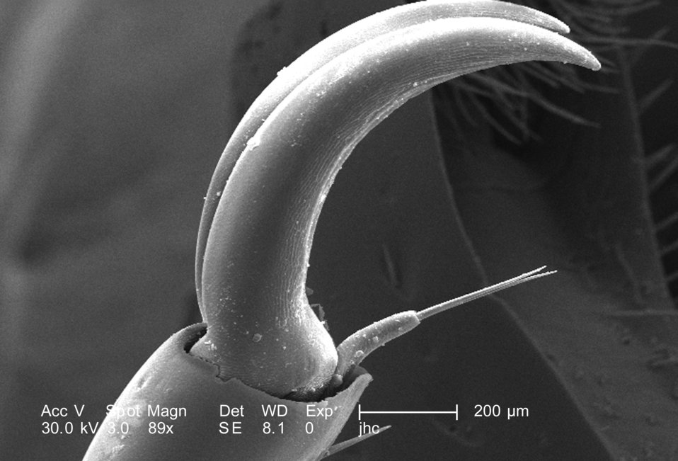 Still at a low magnification of 89X, which is twice as high as PHIL 9943, this scanning electron micrograph (SEM) again depicted some of the