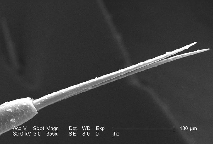 At an even higher magnification of 355X, which is twice as high as PHIL 9944 and four time greater than PHIL 9943, this scanning electron mi