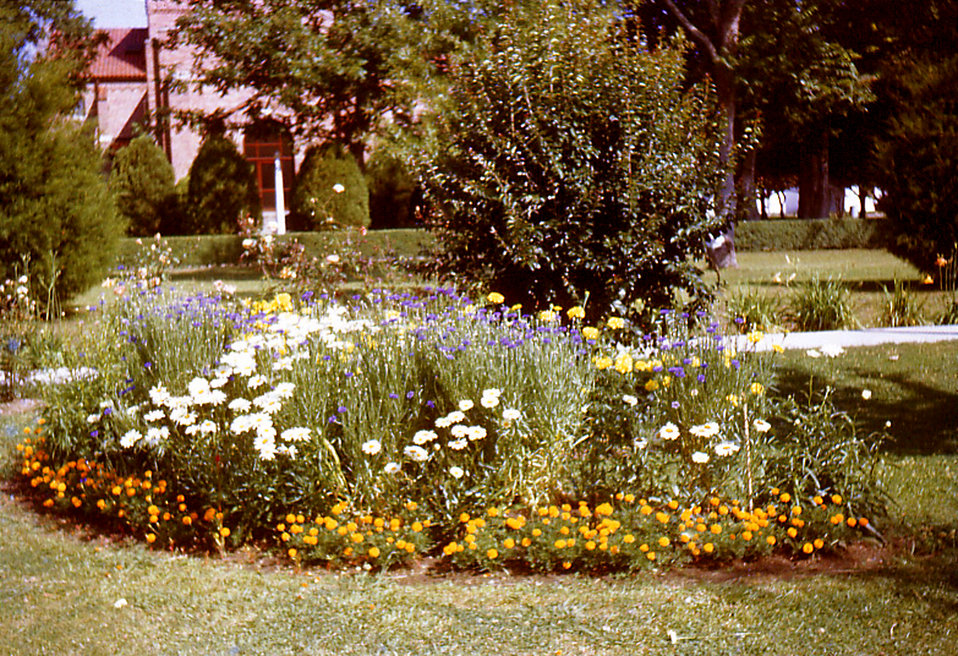 Depicted in this historic image was one of the Carville, Louisiana Leprosarium's community flower gardens that was maintained by the hospita