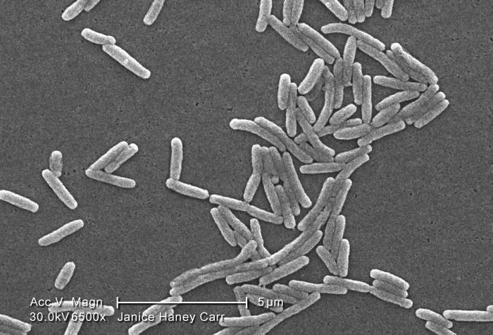 Under a high magnification of 6500X, this scanning electron micrograph (SEM) depicted a large group of Gram-negative Legionella pneumophila