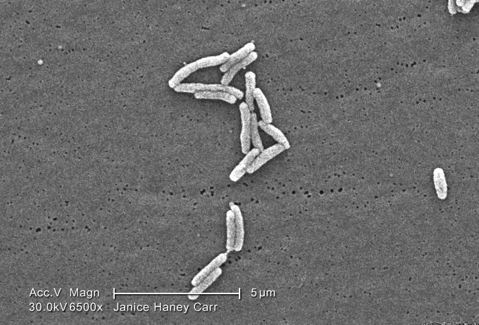 Under a moderately-high magnification of 6500X, this scanning electron micrograph (SEM) depicted a small grouping of Gram-negative Legionell