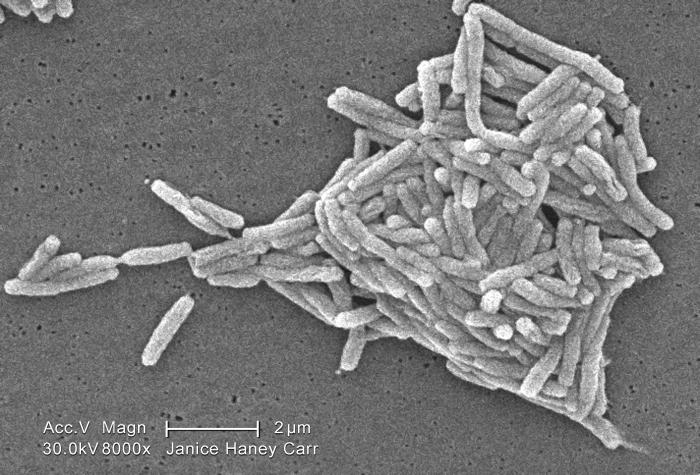 Under a moderately-high magnification of 8000X, this scanning electron micrograph (SEM) depicted a grouping of Gram-negative Legionella pneu