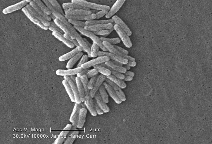 Under a moderately-high magnification of 10000X, this scanning electron micrograph (SEM) depicted a number of Gram-negative Legionella pneum