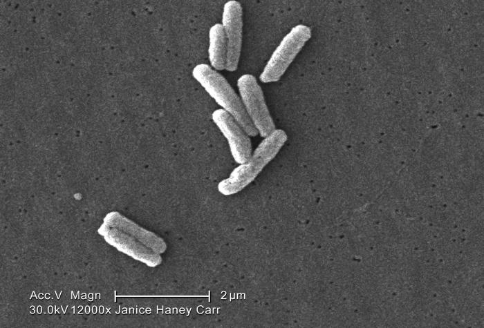 Under a very high magnification of 12000X, this scanning electron micrograph (SEM) depicted a number of Gram-negative Legionella pneumophila