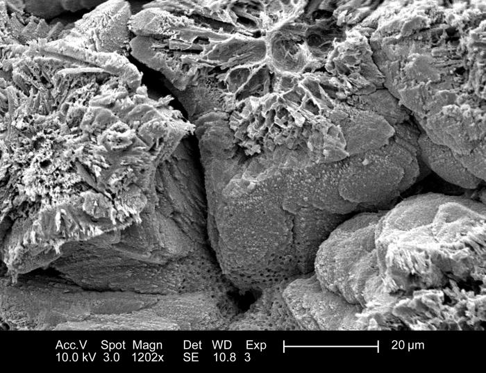 This 2005 scanning electron micrograph (SEM) depicted the morphologic characteristics of the inner surface of an unidentified bird's eggshel