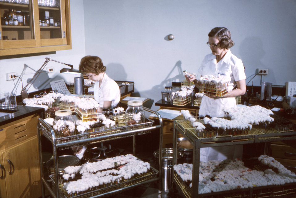This historic 1964 photograph depicted two laboratory technicians, as they were in the process of performing a bacteriologic culture analysi