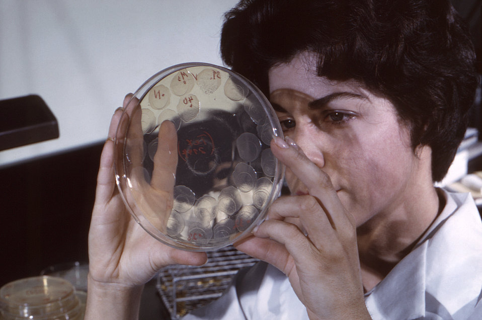 This historic 1963 photograph depicted laboratorian Gail Wathen, as she was performing an examination of an agar culture Petri dish, which h