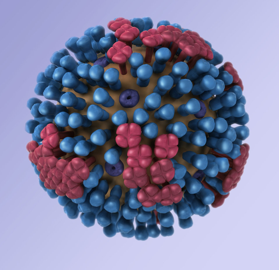 This illustration provides a 3D graphical representation of a generic influenza virion's ultrastructure, and is not specific to a seasonal,