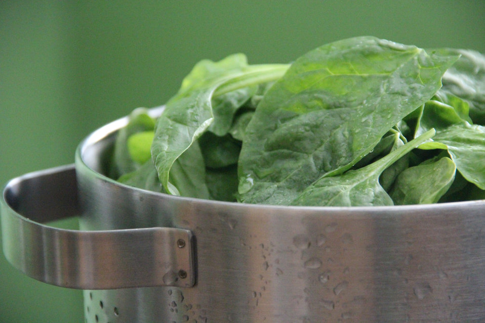 This image depicts a metal colander filled with freshly-washed spinach leaves, which were now ready to be eaten raw in a delicious salad, or