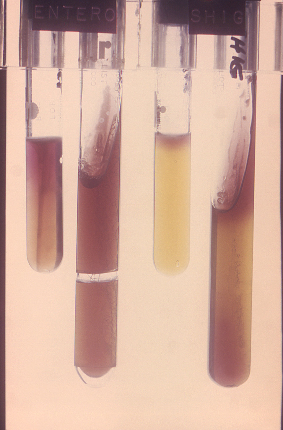 Used in the identification of Enterobacteriaceae bacteria, this image depicts four test tubes used in a Diagnostic Research, Inc., R/B Enter