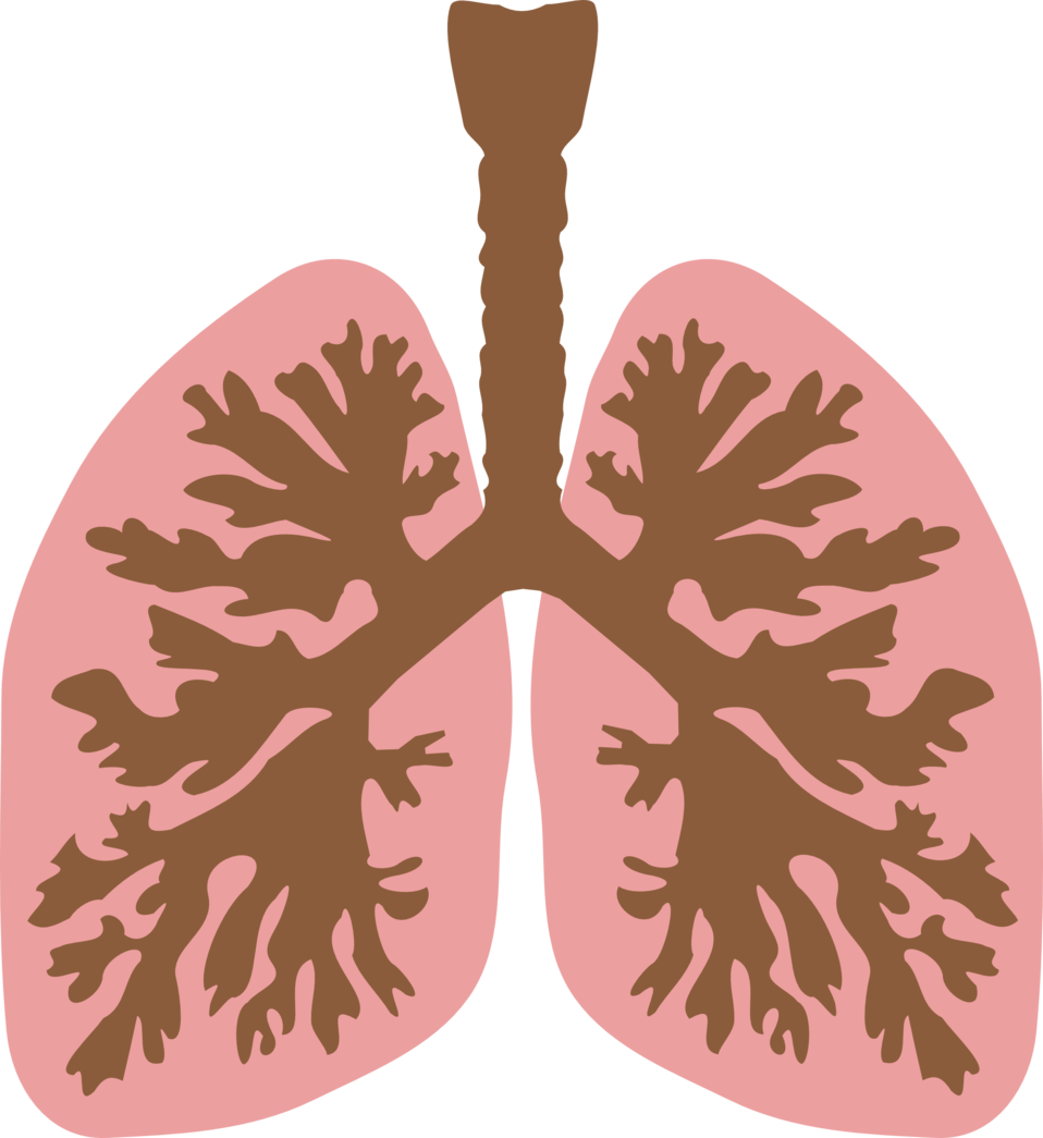 Lungs and bronchus