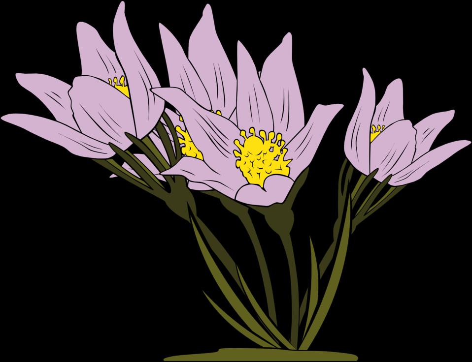 Anemone Patens