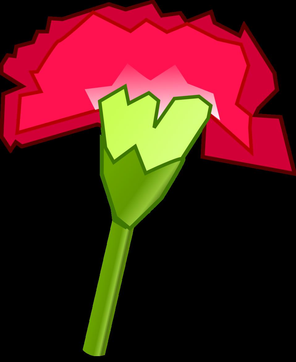 Cravo / Carnation