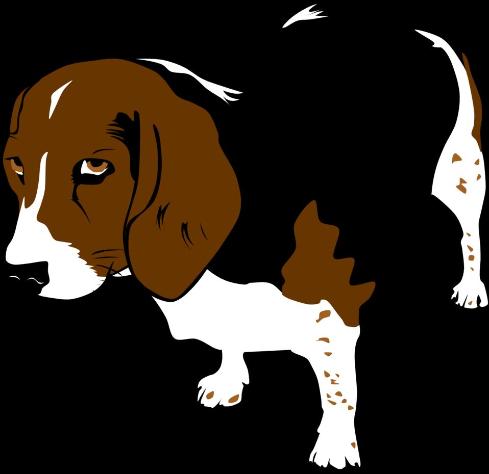 Copper the Beagle