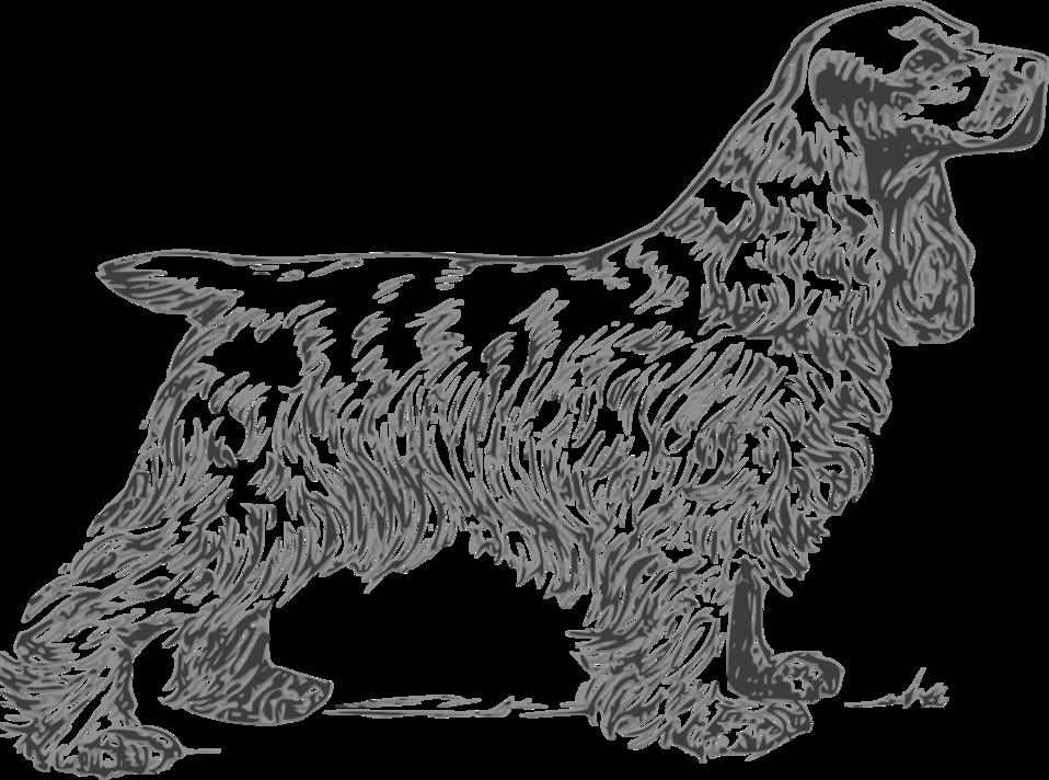 coker spaniel grayscale
