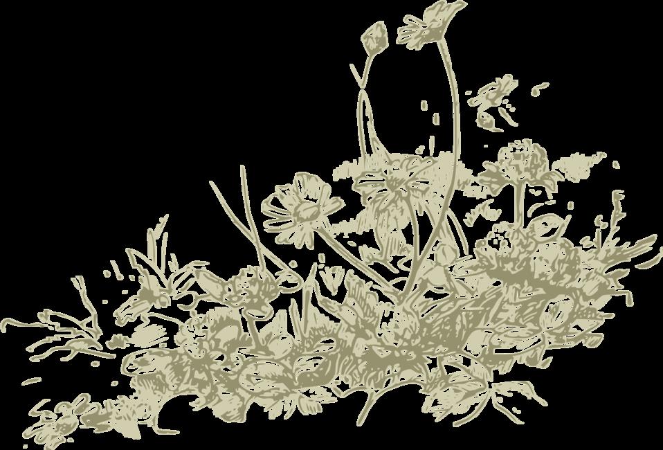 wildflowers - more detail