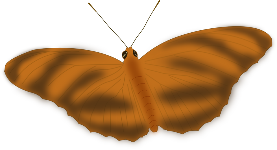 An Ethereal Butterfly