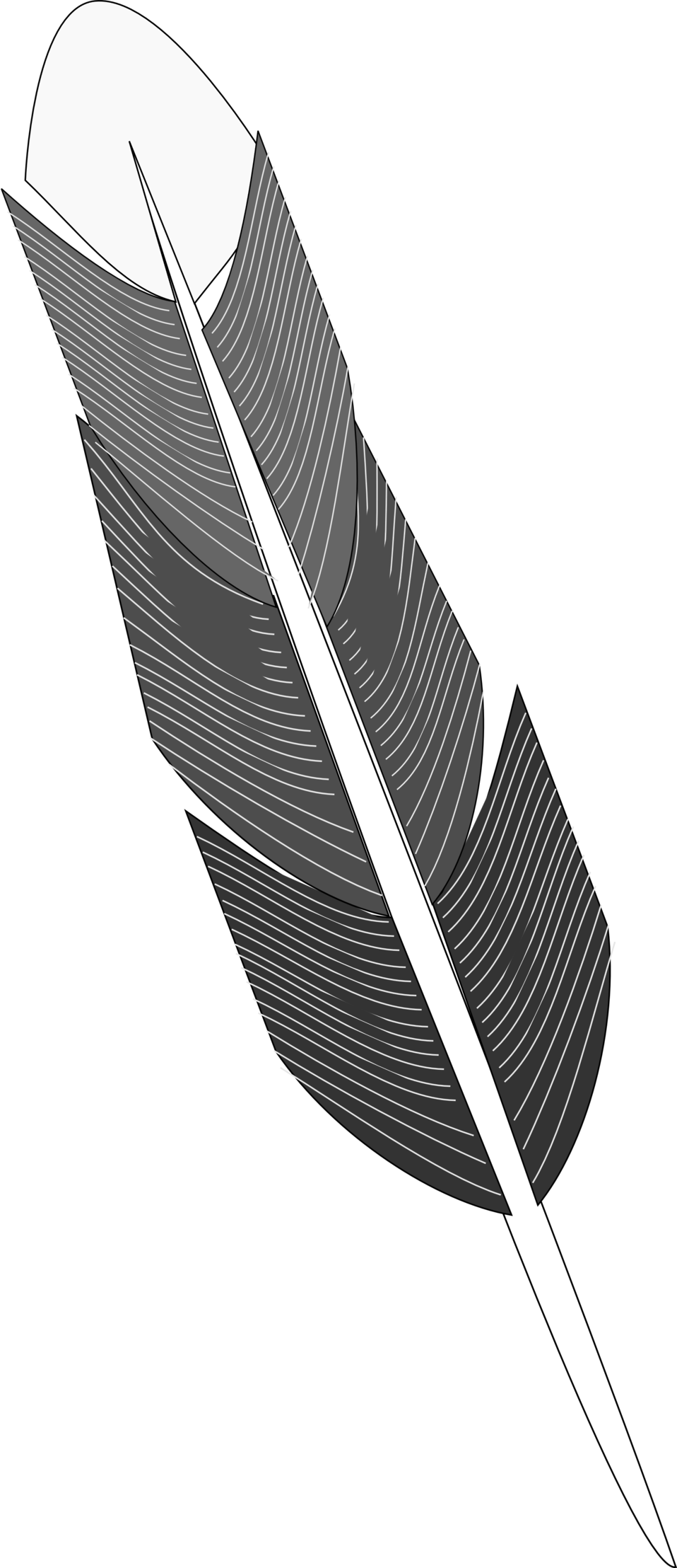 Grayscale Feather