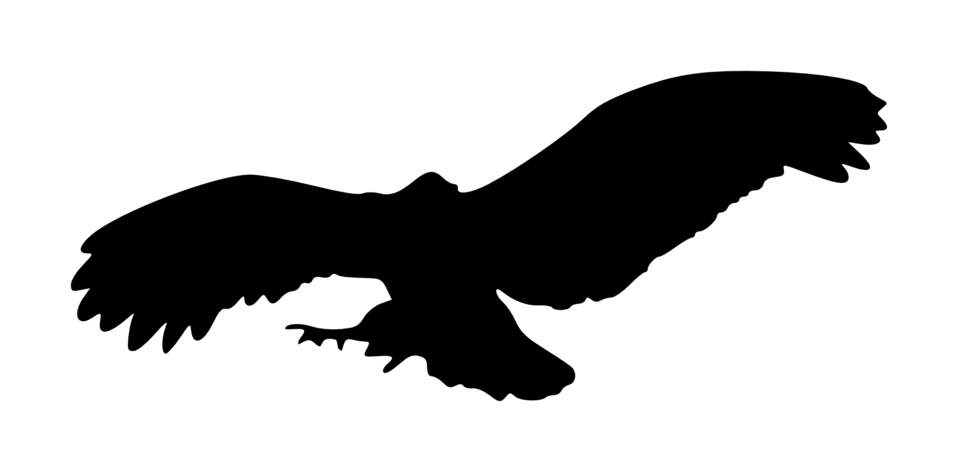 Eagle silhouette 7