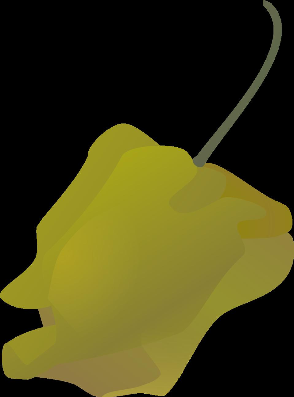 habanero pepper simple